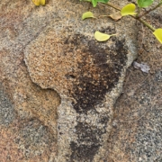 Africa on the Granite in the Seychelles, you can see when you book a hike or walk with us
